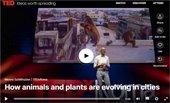 Ted Talk-How animals and plants are evolving in cities CLICK HERE